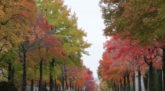 三色彩道の木々が見頃です。