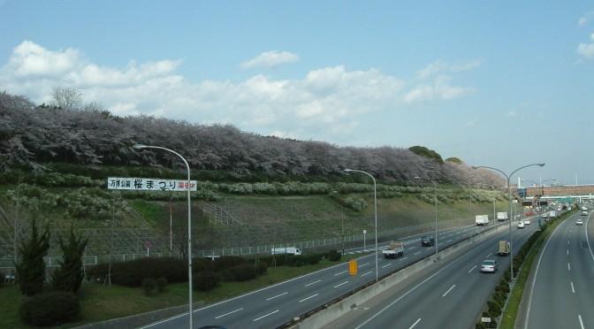 万博公園の満開の桜