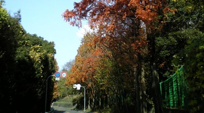 山田北から箕面市小野原へ続く山田上小野原線